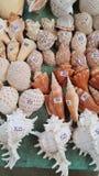 Seashells on sale. In the market stock photos