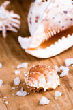 Seashells and salt Stock Photo