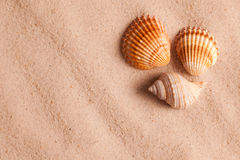 Seashells in sand Stock Photos