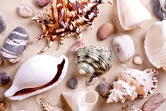 Seashells in sand Stock Photography