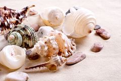 Seashells in sand Stock Photo