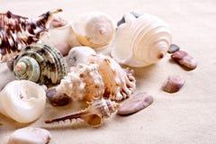 Seashells in sand Stock Photo