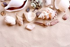 Seashells in sand Royalty Free Stock Photography