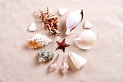 Seashells in sand Stock Photography