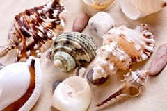 Seashells in sand Stock Images