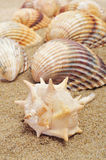 Seashells on the sand. Some seashells on the sand of a beach stock photography
