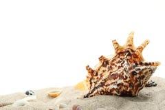Seashells on sand Royalty Free Stock Photo