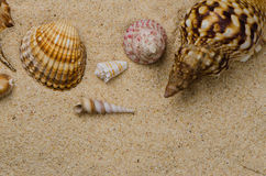 Seashells on the sand Royalty Free Stock Images