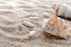 Seashells and sand Stock Image
