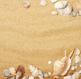 Seashells in sand Royalty Free Stock Photos