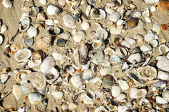 Seashells in sand Stock Photos