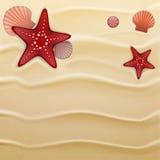 Seashells on sand, background Stock Photography