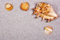 Seashells on the sand Royalty Free Stock Photos