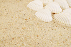 Seashells on sand background Royalty Free Stock Photo