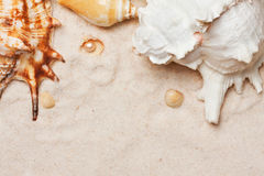 Seashells on sand background. Summer concept Royalty Free Stock Photography