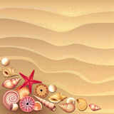 Seashells on sand background Stock Photography