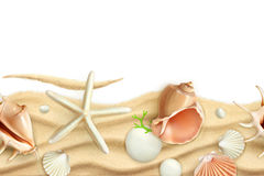 Seashells on sand background Royalty Free Stock Photos