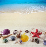 Seashells on sand beach Stock Image