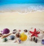 Seashells on sand beach stock image
