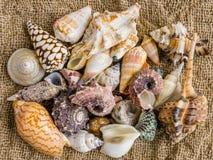 Seashells on the sand of a beach. Royalty Free Stock Photos