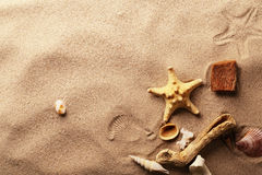 Seashells on sand beach royalty free stock photography