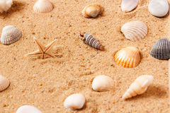 Seashells on sand beach. Copy space. Stock Image