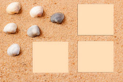 Seashells on sand beach. Copy space. Royalty Free Stock Image
