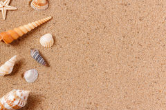 Seashells on sand beach. Copy space. Stock Photography