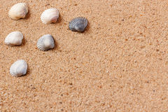 Seashells on sand beach. Copy space. Royalty Free Stock Photo
