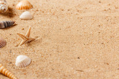 Seashells on sand beach. Copy space. Royalty Free Stock Images