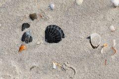 Seashells on sand beach at hot sun summer day Stock Photos