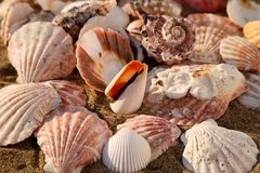 Seashells on the sand of a beach, seashell summer background Stock Images