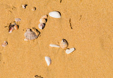 Seashells in sand on a beach Royalty Free Stock Images