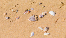 Seashells in sand on a beach Stock Image