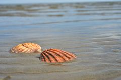 Seashells sand beach shoreline Sea of Cortez Baja, Mexico Royalty Free Stock Photo
