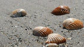Seashells in the sand beach, waves splash on the shells.Beautiful seashells on a tropical beach.Travel concept. Seashells in the sand beach, the waves splash on stock video