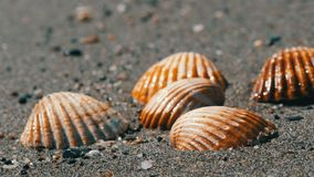 Seashells in the sand beach, waves splash on the shells.Beautiful seashells on a tropical beach.Travel concept. Seashells in the sand beach, the waves splash on stock footage