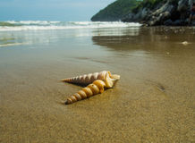 Seashells on the sand. Royalty Free Stock Photography