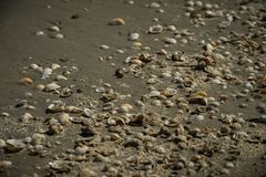 Seashells in the sand at the Black Sea, Romania. Seashells in the sand. A variety of seashells at the seaside in the sun. Souvenir, vacation stock photo