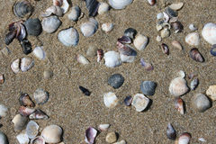 Seashells on the sand Royalty Free Stock Photography