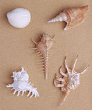Seashells on sand Stock Images
