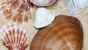 Seashells on Sand stock video footage