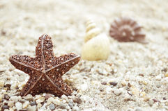 Seashells on the sand. Different seashells on the sand Royalty Free Stock Photo
