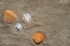 Seashells on the sand. Different seashells on the sand background on the ocean beach Stock Photos