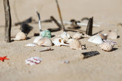 Seashells on the sand. Different kind of seashells and wood scattered on the sand Stock Images