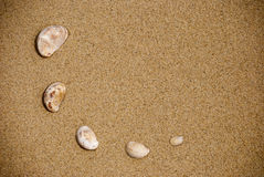 Seashells on the sand Stock Image