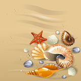 Seashells on the sand. Illustration of seashells on the sand Stock Photo