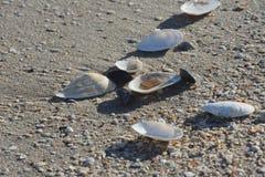 Seashells on sand. Image of seashells on sand Royalty Free Stock Image