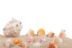 Seashells in the sand Royalty Free Stock Images