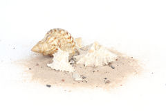 Seashells on sand isolated on white bakcground. Three seashells on sand isolated on white bakcground royalty free stock photography